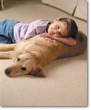 Upholsery and Animal Carpet Cleaning Company in New Berlin